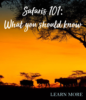 Safaris 101